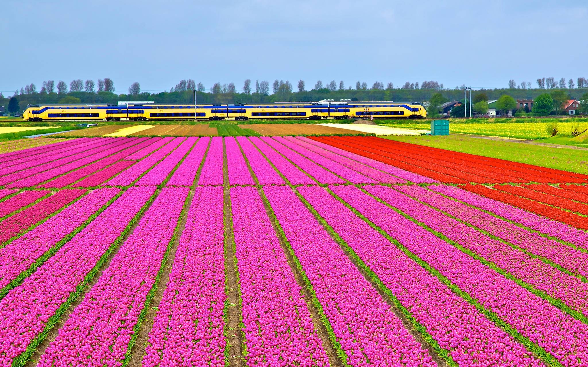 Holland Tulip Season en NS trein