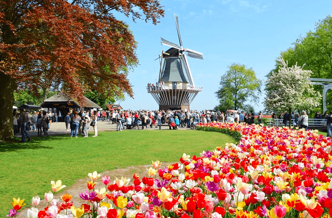 windmill and tulip flowers are part of the Great places in Europe To Visit in March