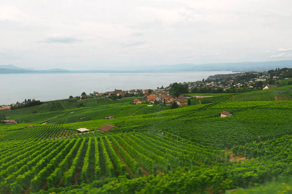 Lausanne Switzerland Fields