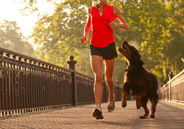 running and traveling with your pets