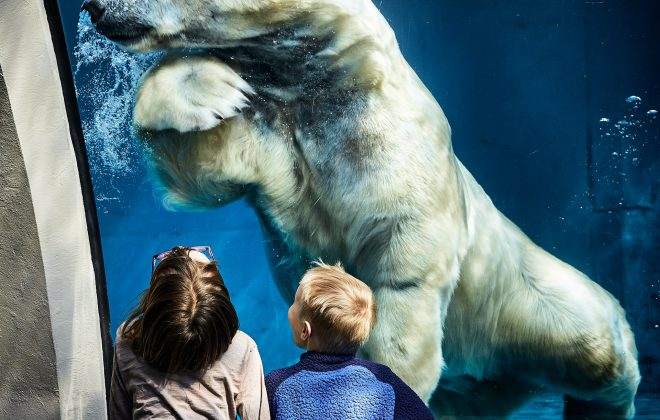 aquarium de zoo avec un enfant touchant