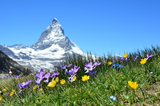 Scenic Wildlife Destinations In The World: Wengen Flowers of the Swiss Alps