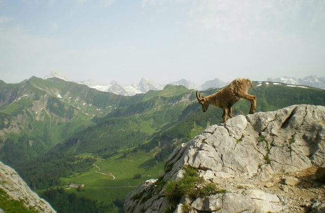 animal on top of a mountain